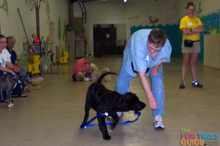 why are guide dogs useful