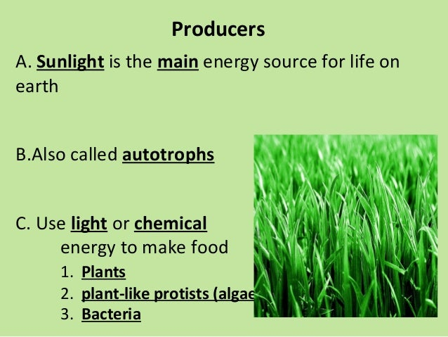 ecology powerpoint with guided notes